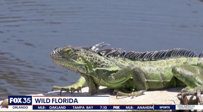 Screenshot: FOX 35 Orlando